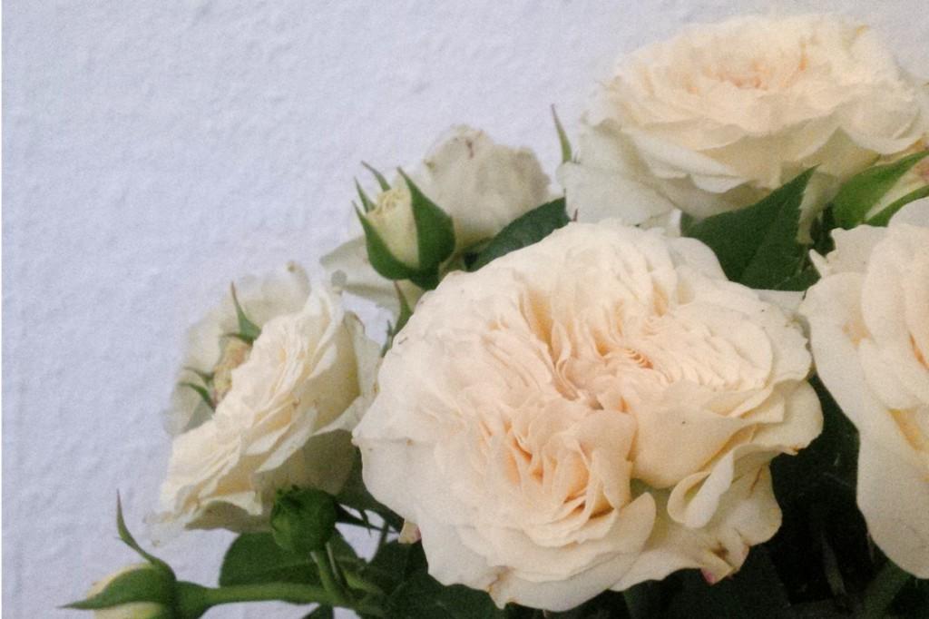 15-09-23-Blumen